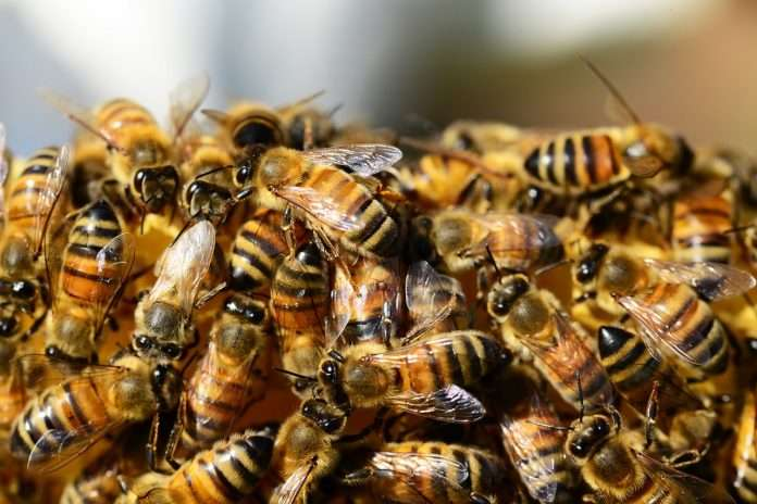 Killing Bees Pesticides Banned in France